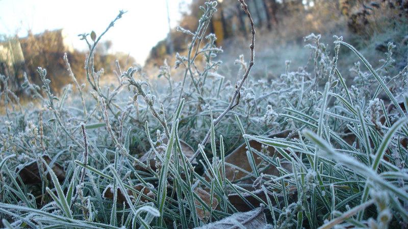 По області прогнозують заморозки