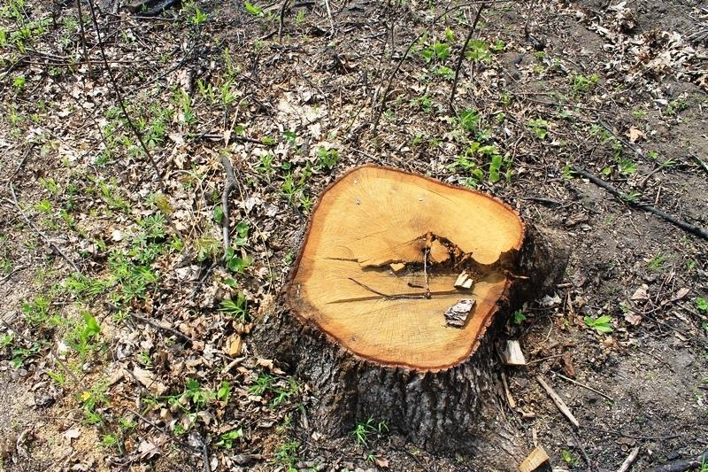 Своїми незаконними діями лісник спричинив матеріальну шкоду на загальну суму близько 85 тисяч гривень
