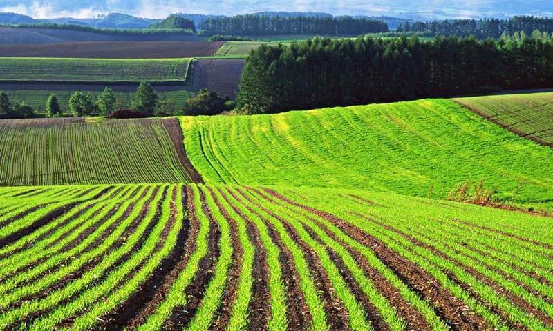 У Хмельницькій області учасникам бойових дій передано у власність 20 107,82 гектарів землі