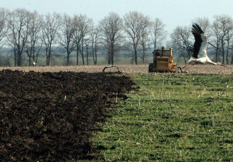 Більшість ділянок призначені для ведення особистого селянського господарства