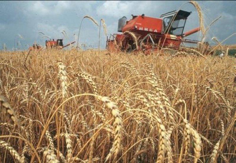 Найбільш врожайним виявився Камёянець-Подільський район