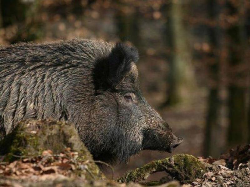 Для участі у полюванні мисливці повинні мати при собі відповідні документи