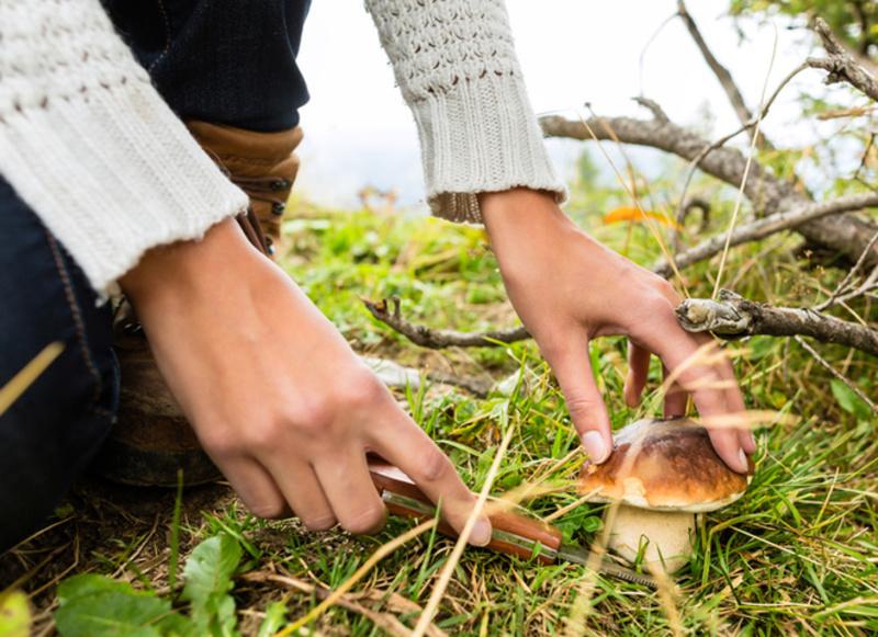 Деякі гриби мають