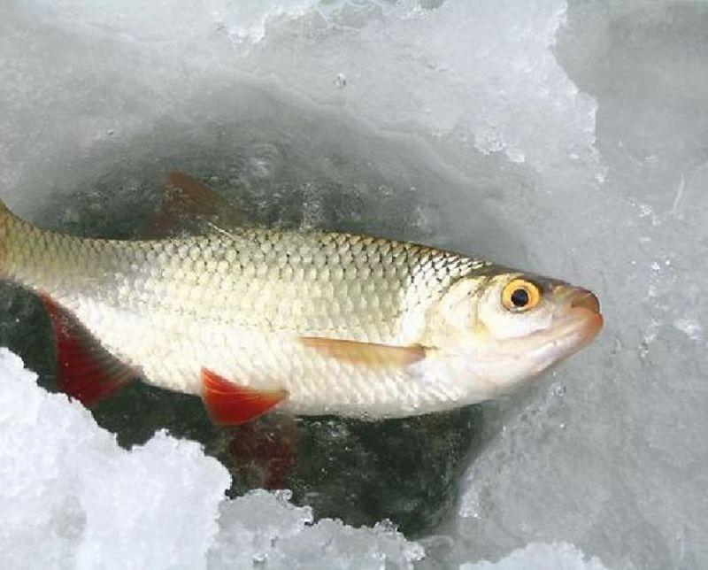 Вилучили в порушників понад 150 кг риби