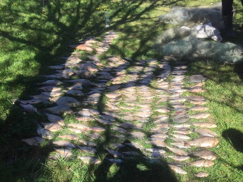 Браконьєр виловив півтори сотні рибин