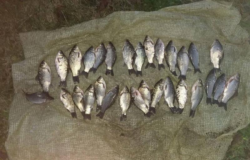 Інспектори виявили чотири випадки реалізації риби і раків без належних документів