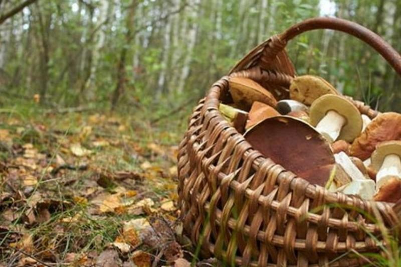 На Дунаєвеччині пенсіонер пішов у ліс по гриби і заблукав