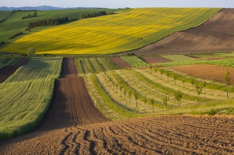 Площа неправомірно відчужених земель складає 65 гектарів