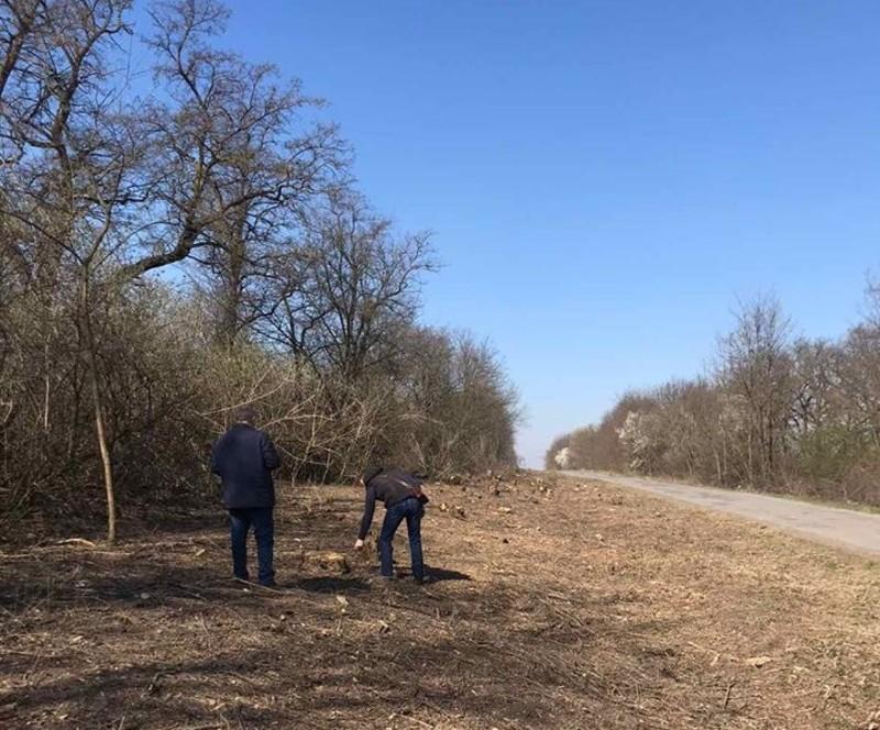 Виявлено незаконну рубку дерев на суму понад 2 мільйони гривень