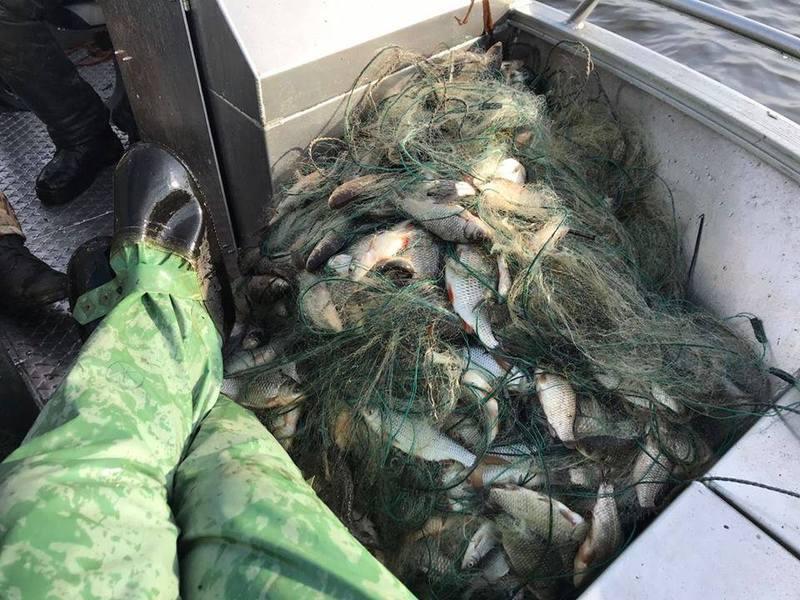 За здійснення браконьєрського вилову риби передбачена адміністративна та кримінальна відповідальність