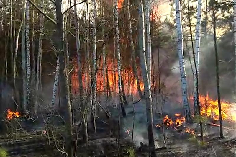 Протягом минулої доби на Хмельниччині сталос три пожежі у лісових господарствах