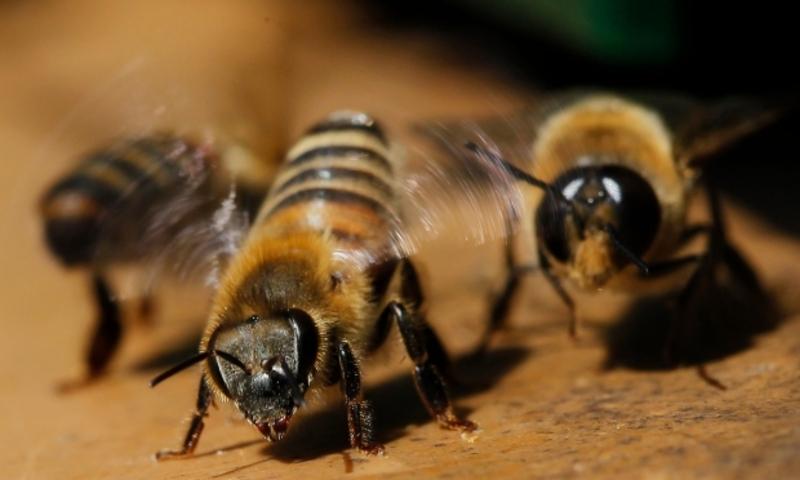 Укуси бджіл для 40-річного чоловіка стали смертельними