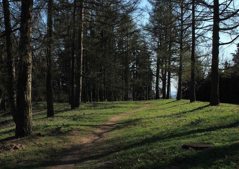 Чудова природа та прогулянки лісом допоможуть подолати бійцям стрес без медикаментів