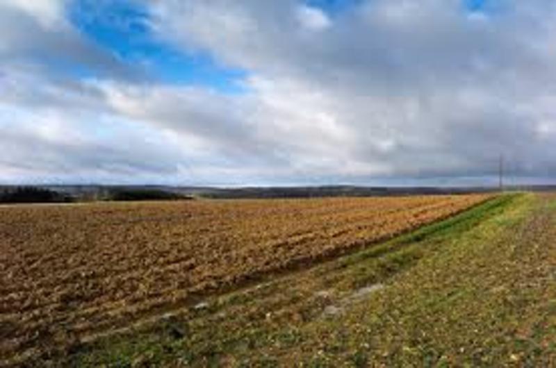 Прокуратура вимагає збільшення розміру орендної плати за використання 77 гектарів сільгоспземель
