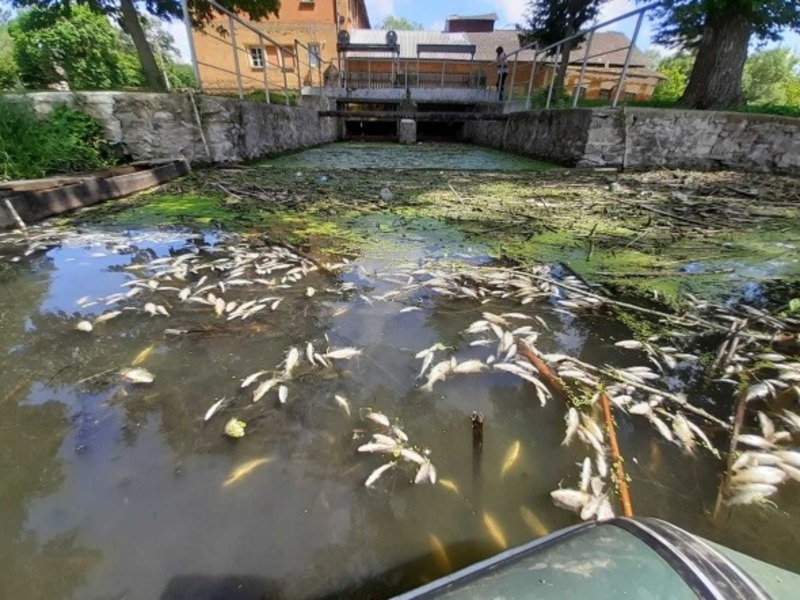 Загинуло тисячі рибин