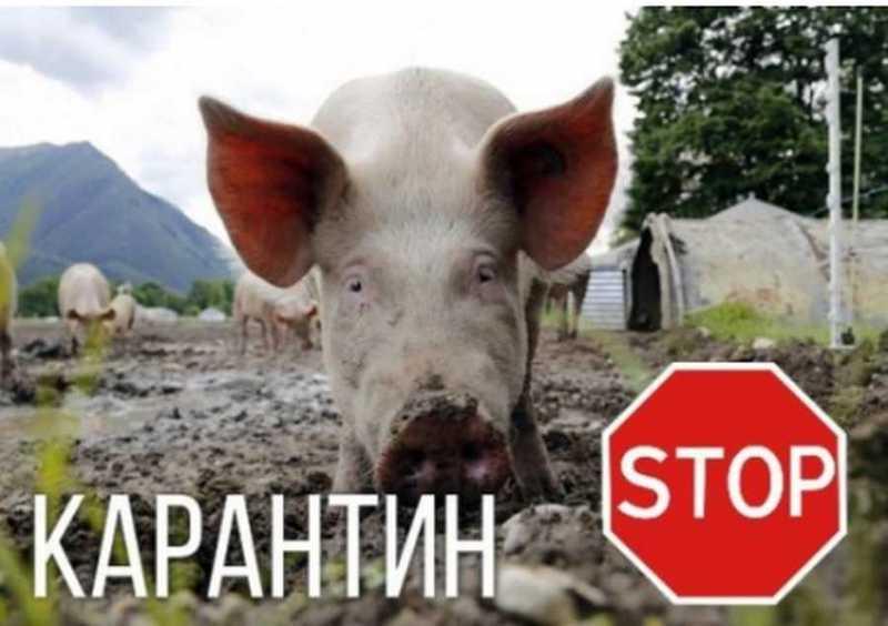 Станом на 17 серпня в зоні захисту ми провели обстеження 1131 домогосподарства та оглянули 1106 голів свиней у 431 домогосподарствах