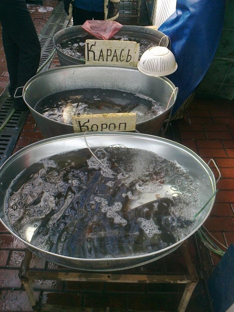 Рибу продавали без необхідних документів