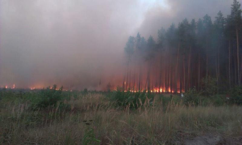 Лісова пожежа на Ізяславщині