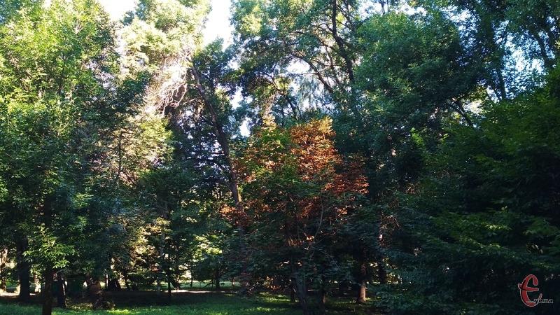 Тепер правоохоронці мають встановити осіб, які незаконно зрубали 34 дерева