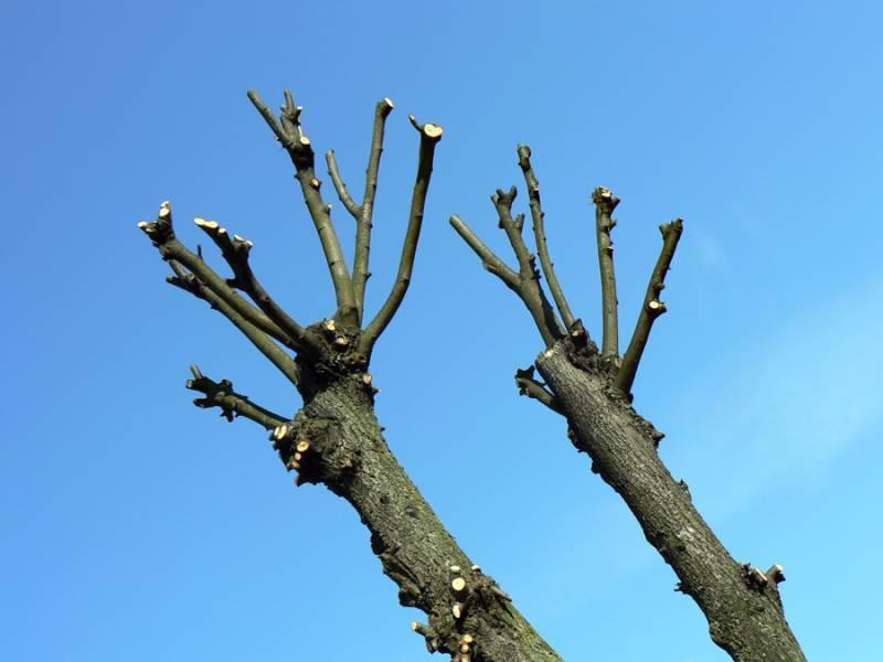 На провулку Пилипчука омолоджуватимуть дерева