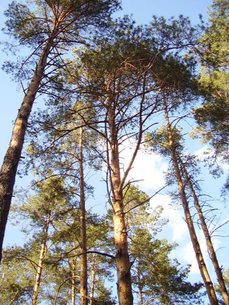 Обсяги пошкоджень лісових насаджень з початку року складають 3 тисячі гектарів