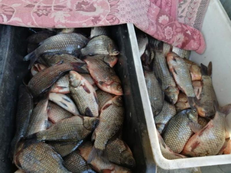 Рибу вилучили у продавців