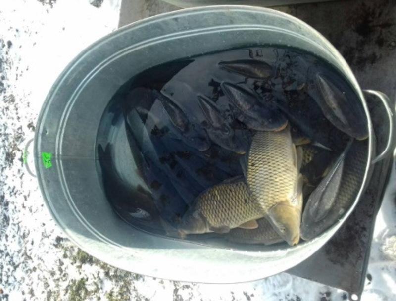 За продаж риби без відповідних дозволів, передбачений штраф