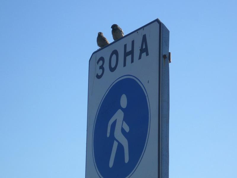 У місті може з'явитися ще одна пішохідна зона