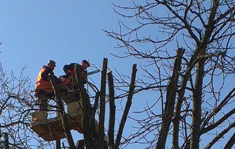 По вул. Козацікій буде проводитися омолодження дерев. Фото: khm.gov.ua