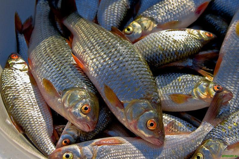 У браконьєрів вилучили  178 кілограмів риби
