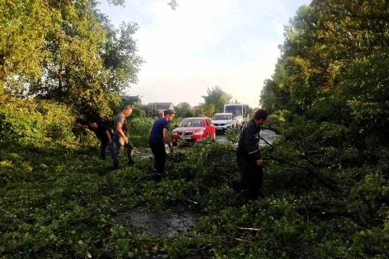 Повалені дерева перекривали рух транспорту