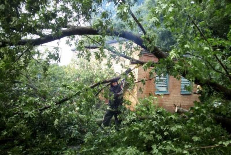 Рятувальники розпиляли та прибрали дерево з автомобіля