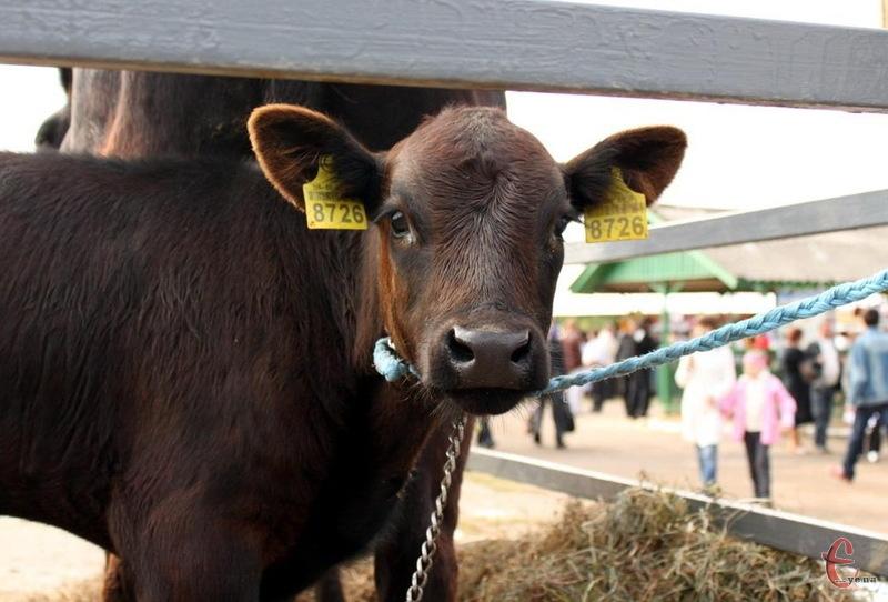 Чоловік у суді домігся того, що постанву про штраф за ненадання худоби для вакцинації скасували