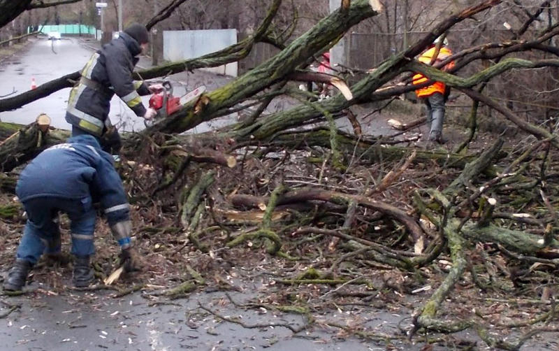 Сильний вітер повалив дерева на дорогах Хмельниччини