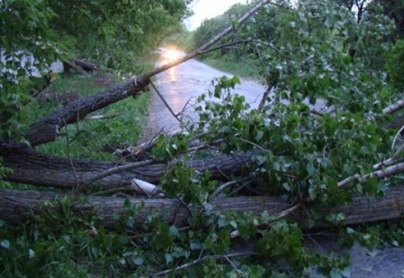 Через негоду на Хмельниччині, на автошляхи області повалило 14 дерев