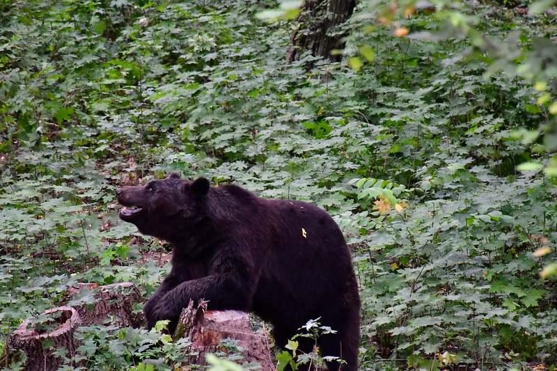 Центр для диких тварин розташований на території Національного природного парку «Подільські Товтри»