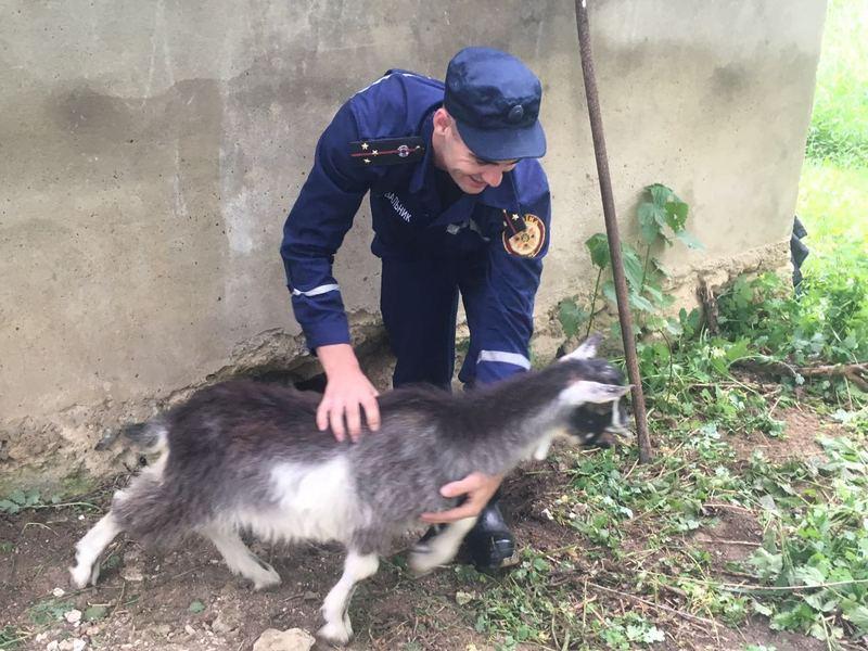 Власник непосидючої тваринки подякував надзвичайникам за її порятунок