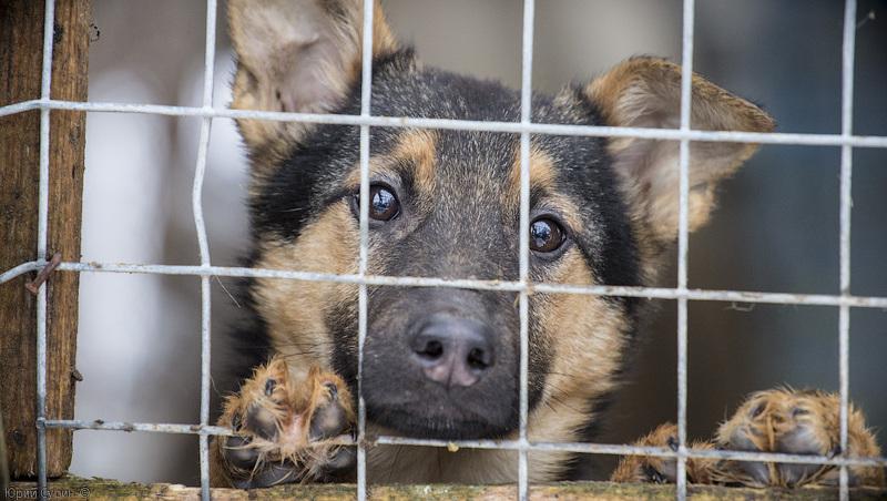 У місті є проблема безпритульних собак