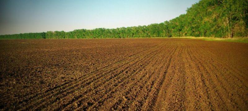 У держави залишаються повноваження з розпорядження стратегічно важливими земельними ділянками