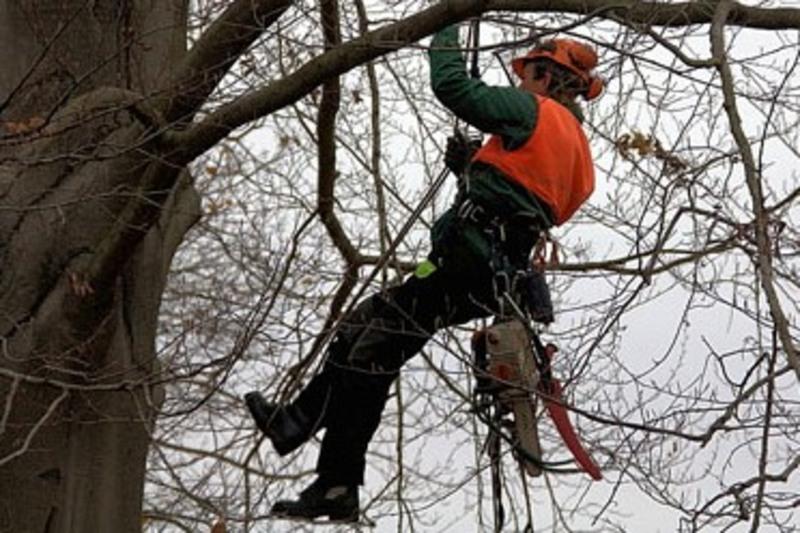 На вулиці омолоджуватимуть дерева