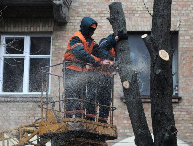 У Хмельницькому омолоджуватимуть дерева на Курчатова