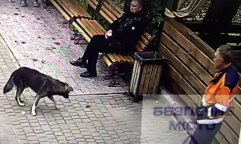 Правоохоронці розслідують отруєння собак у Хмельницькому