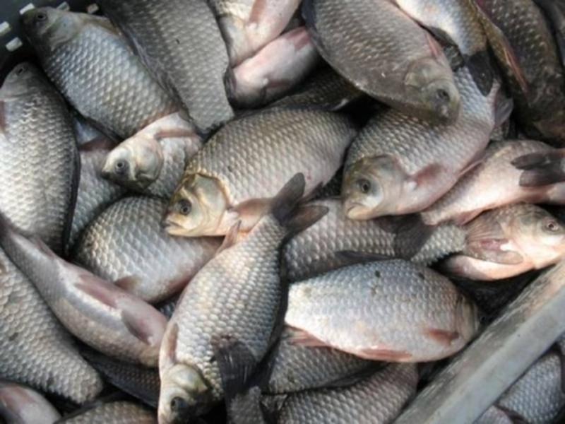 У порушників вилучили рибу