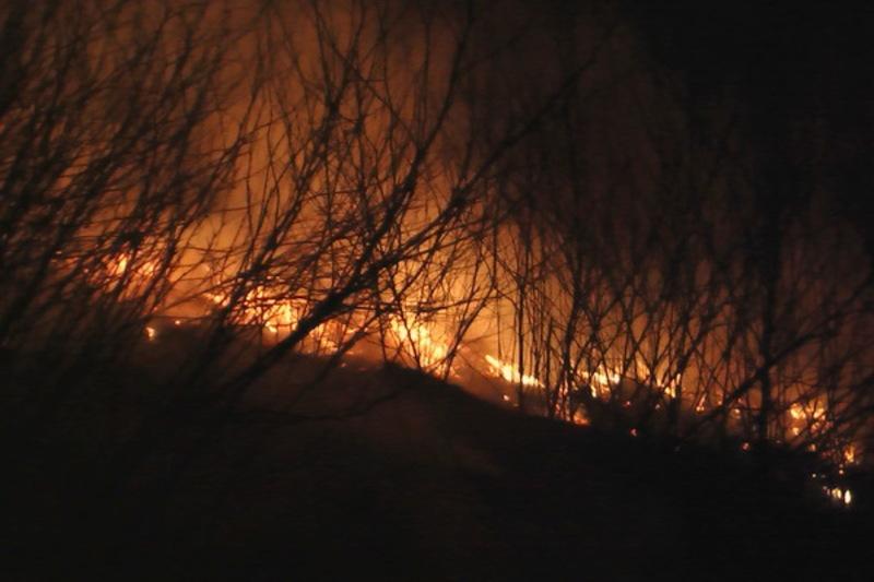 Рятувальники ліквідували пожежу сухостоїв