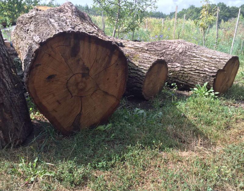 У прокуратурі зареєстрували кримінальне провадження за фактами незаконної порубки дерев