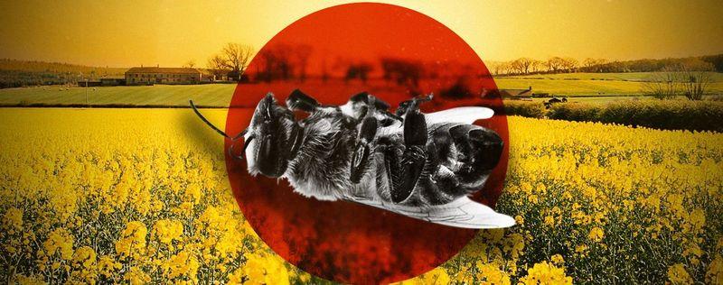 Випадки загибелі бджіл зафіксовані в багатьох селах