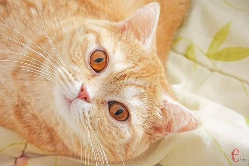 Трохи нестандартну петицію має розглянути влада Хмельницького - про визнання котів співмешканцями міста