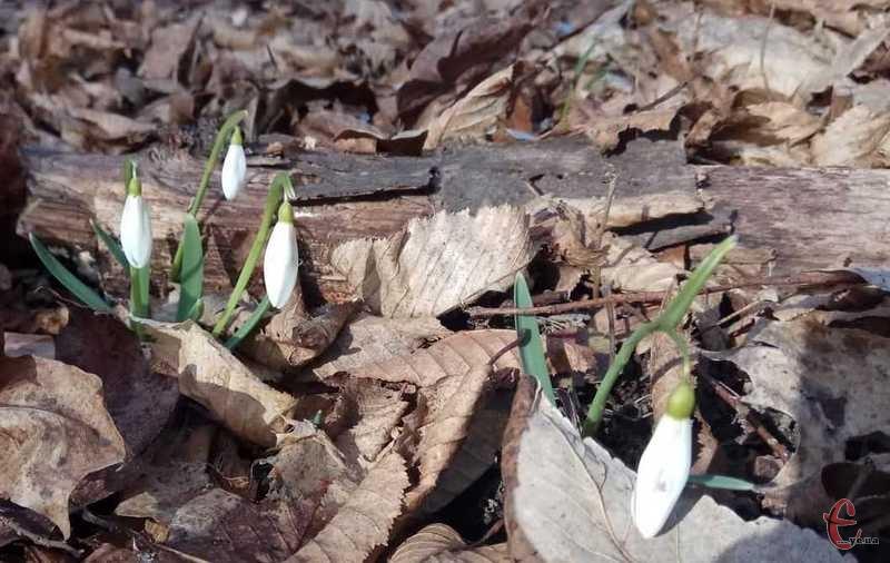 Якими б не були новини - не забувайте, що скоро весна.
