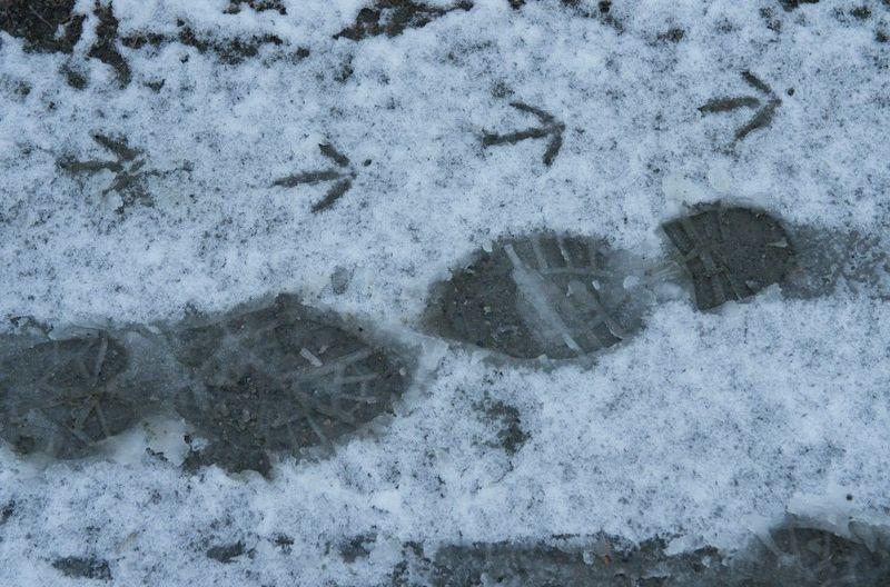 З прогнозом погоди синоптики не помилилися: на Хмельниччині пішов перший суттєвий сніг