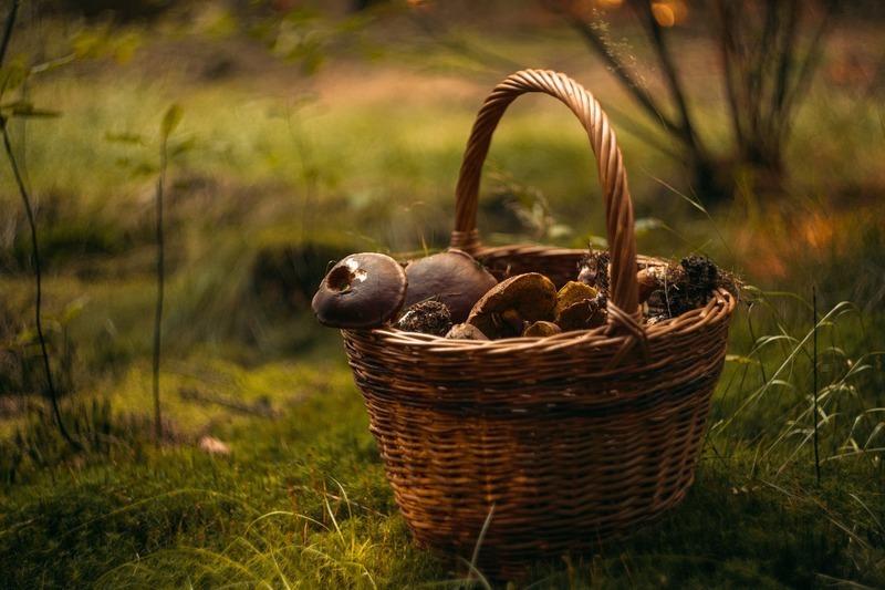 Кам'янчанка, збираючи гриби в Тернопільській області, заблукала в лісі